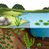 reshenie_problem_dekorativnogo_vodoema