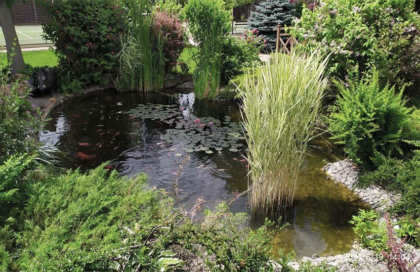 Декоративный водоем с рыбой До очистки от водорослей