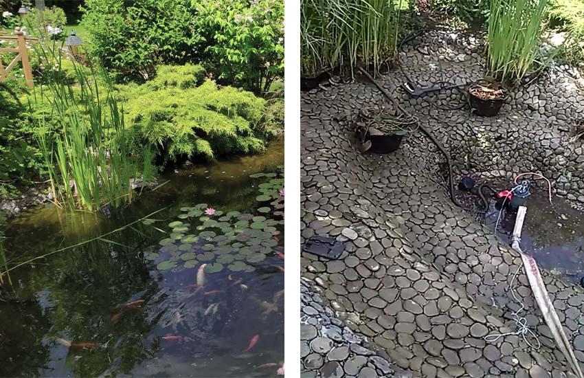Сравнение одинаковых участков водоема До и После чистки